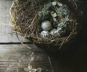 bird, egg, and photography image