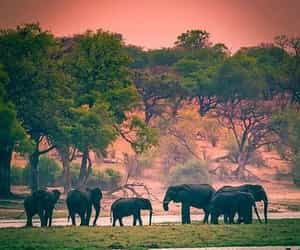 animal, Botswana, and elephant image