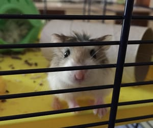 hamster, iloveyou, and criceto image