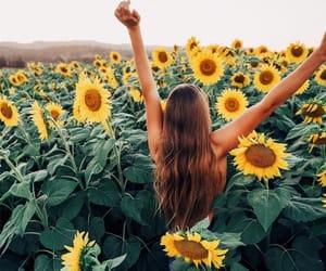 beautiful, girl, and sunflowers image