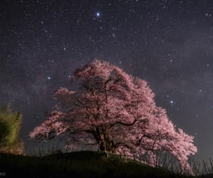 cherry blossom, night, and photography image