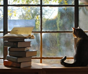 books, cats, and nature image