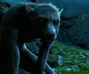 harry potter, hogwarts, and werewolves image