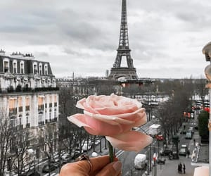 paris, rose, and france image