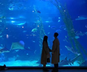 aesthetic, aquarium, and love image