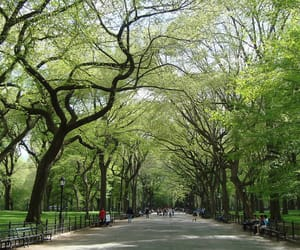 aesthetic, brown, and Central Park image