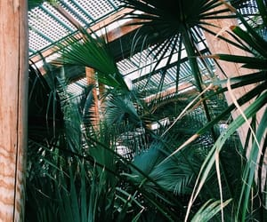 tropical, darkgreen, and tumblr image