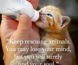 animals, save, and be kind image