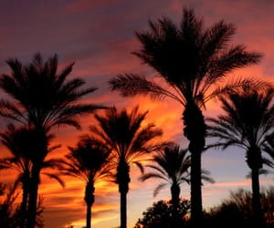 sunset and date palm image