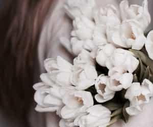 beautiful, rose, and roses image