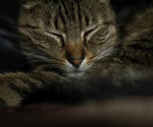 cat and tabby cat image