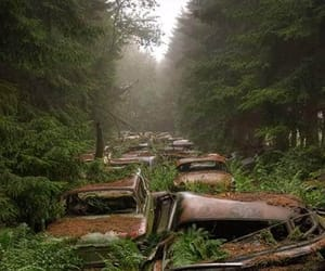 cars, forrest, and old image