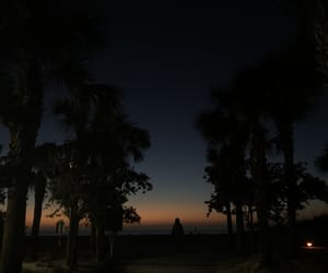 florida, nature, and pretty image