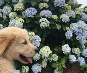 flowers and puppy image