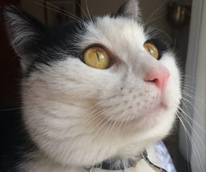 blog, cat, and crazy image