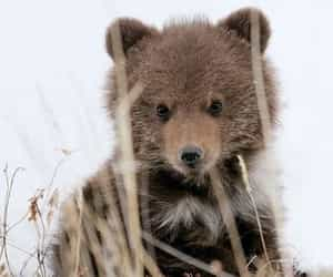 baby animals, baby bear, and animals image