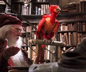 albus dumbledore, hogwarts, and magical creatures image