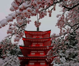aesthetic, blossom, and japan image