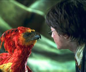 harry potter and phoenix image