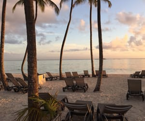 beach, palm trees, and sun image