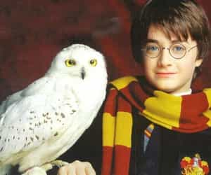 harry potter, owl, and photo image