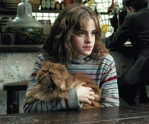 harry potter, pets, and ginger cat image
