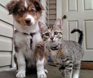 animals, cat, and puppy image