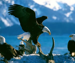 animals and eagle image