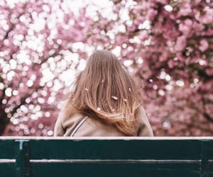 bench, cherry blossom, and spring image