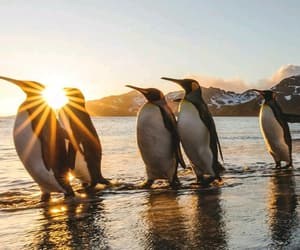 animals, nature, and penguins image