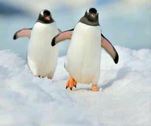 animal, snow, and walk image