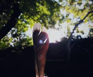 arboles, naturaleza, and pajaros image