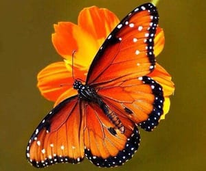 Animales, belleza, and buterfly image