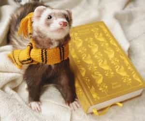 ferret, hp, and harry potter image