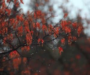 gif, rain, and autumn image