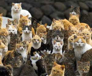 cats, cute, and japan image