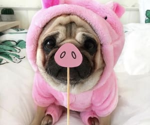 animals, funny, and pink image