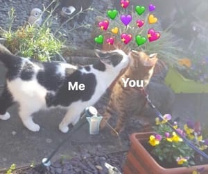 meme, love, and cats image