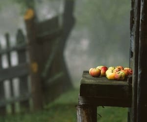 apple, forest, and green image