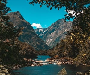 new zealand, trees, and peaking image