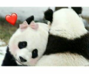 love, panda, and cute image
