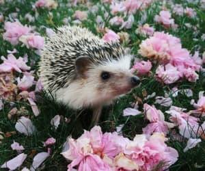 flowers, hedgehog, and animal image