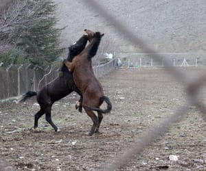 animal, fight, and nature image