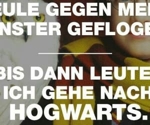 eule, harry potter, and forever image