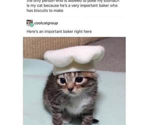 baker, cat, and funny image