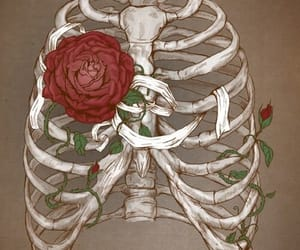 rose, bones, and art image