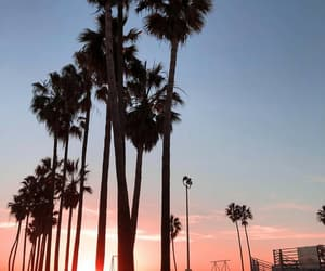 nature, palmtrees, and sky image