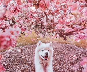 dog, feel, and flowers image