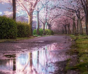 beauty, japan, and cherry blossom image