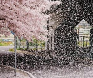 beauty, cherry blossom, and japan image